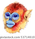 Exotic monkey wild animal in a watercolor style isolated. Aquarelle wild animal for background. 53714610