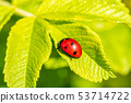 Ladybird on green leaf 53714722