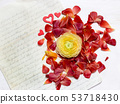 Ranunculus flowers background 53718430
