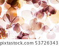 pink hydrangea flowers isolated on the white background 53726343