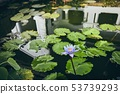 Lotus flower against water reflection of cave 53739293