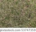 草草地板材料草坪照片紋理 53747359