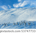 Icy snowy fir trees on winter hill 53747733