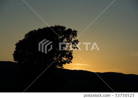황혼의 하늘과 큰 나무의 실루엣 비 에이 53750525