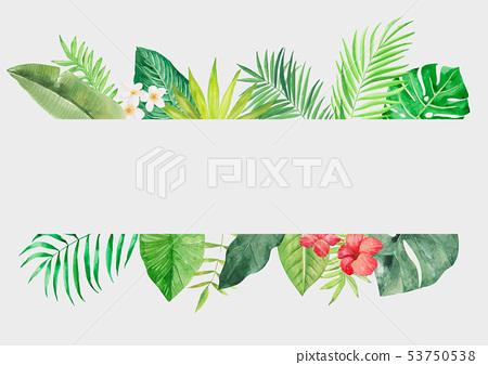熱帶植物背景 53750538
