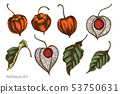 Vector set of hand drawn colored  physalis 53750631