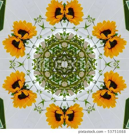 해바라기 원형 패턴 53751088