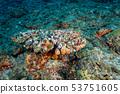 산호 뒤꽂이 한 낚싯줄과 추 53751605