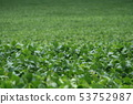 Soybean field in the state of Sao Paulo 53752987