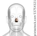 3d rendering of dilator naris 53754321