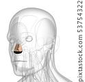 3d rendering of dilator naris 53754322