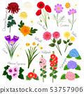 Flower Set 2. Flora Vector Collection. 53757906
