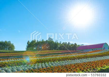 美瑛风景夏季四季Ayanooka和Tokachidake 53760102