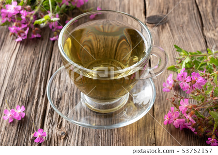 A cup of herbal tea with fresh herb-Robert plant 53762157