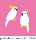조류 잉꼬 앵무새 일러스트 53763346