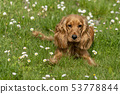 young dog running on the grass 53778844
