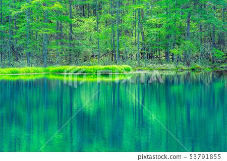 어 射鹿 연못 초여름 【나가노 현】 53791855
