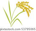 Ear rice 53795065