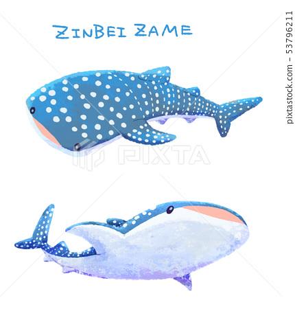 고래 상어 2 53796211