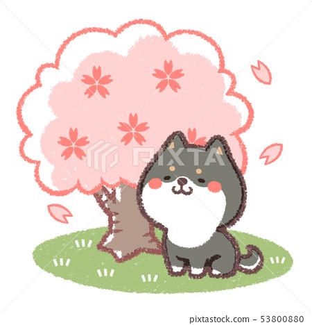 꽃놀이 검은 시바 53800880