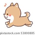 Shiba Inu 53800885