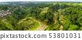 Aerial View of Tegallalang Bali Rice Terraces. Panorama. 53801031