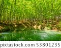 美麗的綠色森林池塘十日町市新潟縣 53801235