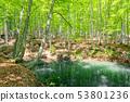 美麗的綠色森林池塘十日町市新潟縣 53801236