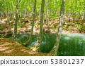 美麗的綠色森林池塘十日町市新潟縣 53801237