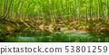 全景美麗的綠色森林池塘十日町市,新潟縣 53801259