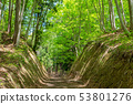 美麗的綠色森林和道路十日町,新潟縣 53801276