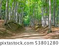 美麗的綠色森林和道路十日町,新潟縣 53801280