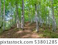 美麗的綠色森林和道路十日町,新潟縣 53801285