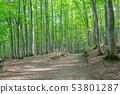 美麗的綠色森林和道路十日町,新潟縣 53801287