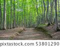 美麗的綠色森林和道路十日町,新潟縣 53801290