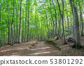 美麗的綠色森林和道路十日町,新潟縣 53801292