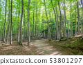美麗的綠色森林和道路十日町,新潟縣 53801297