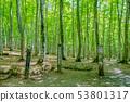 新鮮綠色美麗的森林和信息板新茶縣十日町市 53801317