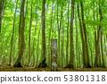 新鮮綠色美麗的森林和信息板新茶縣十日町市 53801318