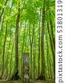 新鮮綠色美麗的森林和信息板新茶縣十日町市 53801319