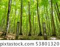 新鮮綠色美麗的森林和信息板新茶縣十日町市 53801320