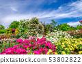 군마 플라워 파크 · 장미 축제 53802822