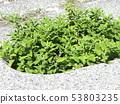 쯔 루나 작은 노란 꽃 53803235