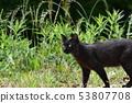 고양이 도둑 고양이 검은 고양이 수컷 · 유월 · 쾌청 · 젊은 53807708