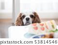 狗盯著食物 53814546