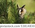 Portrait of a long-eared owl Asio otus. Wild bird 53814830