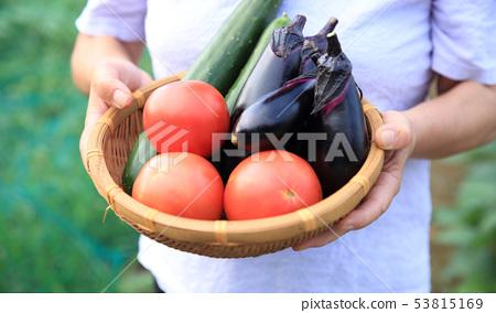 여름 야채를 가진 여자 53815169