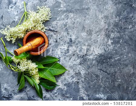 Blossoms of the elderberry 53817201