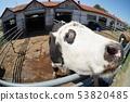 熊貓牛坤3 53820485