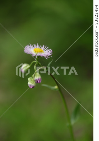 Wild flowers 53822494